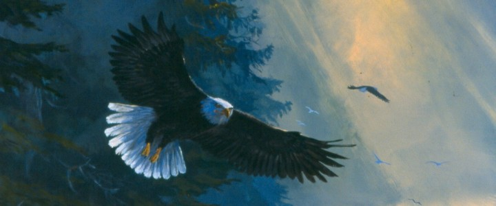 Bald Eagle: Coming in for a Landing - Paper Prints - Artwork Reproductions - Giclees, Paper Prints, Prints and Gift Store