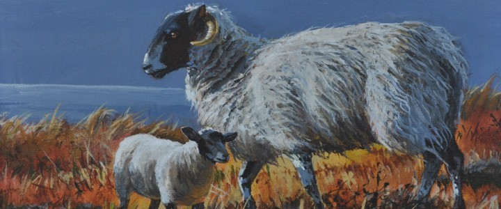 Sheep Family: Donegal, Ireland - Acrylics & Oils - Original Artwork - Acrylics, Oils & Watercolours