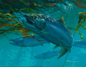Chinook Salmon: Below The Kelp