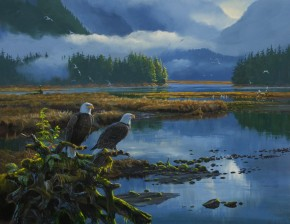 Bald Eagles: Waiting For Salmon In Kynoch Inlet