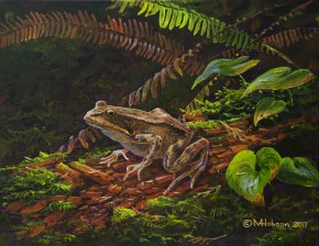 Red-Legged Frog On A Rotten Log