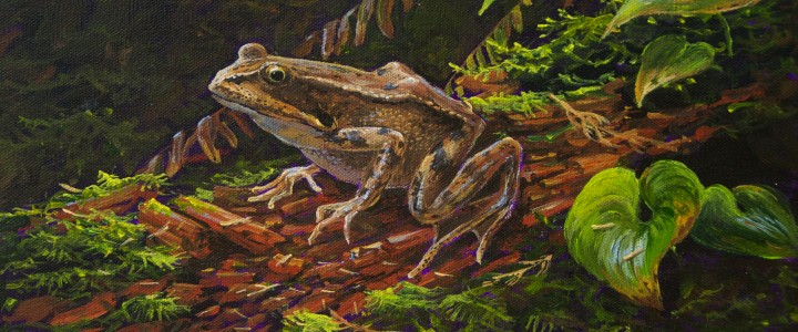 Red-Legged Frog On A Rotten Log - Acrylics & Oils - Original Artwork - Acrylics, Oils & Watercolours