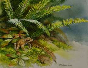 Red Legged Frog And Deer Ferns