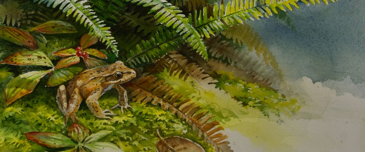 Red Legged Frog And Deer Ferns - All Originals Available - Original Artwork - Acrylics, Oils & Watercolours