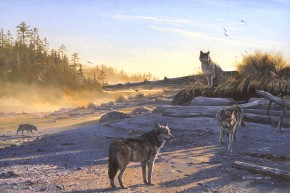 Wolves: Morning Shadows