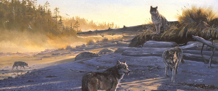 Wolves: Morning Shadows - Paper Prints - Artwork Reproductions - Giclees, Paper Prints, Prints and Gift Store