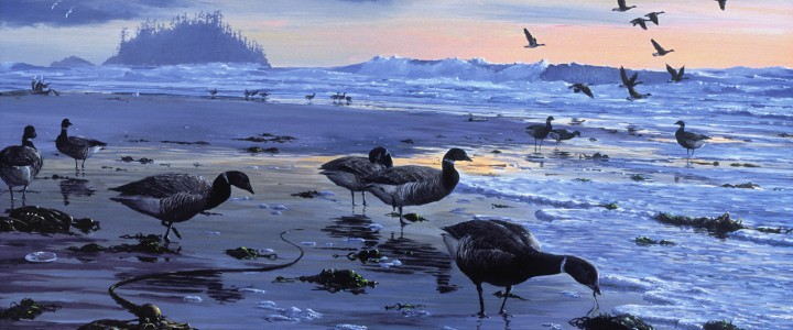 Black Brant: On the Way North - Paper Prints - Artwork Reproductions - Giclees, Paper Prints, Prints and Gift Store