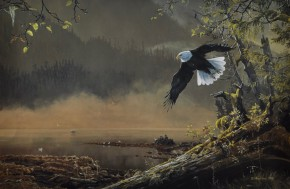 Bald Eagle: Morning Flight