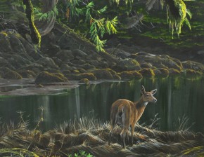Black Tail Deer in the Estuary