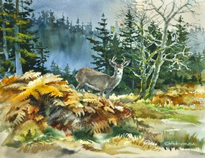 Blacktail Buck: Coming Through The Bracken