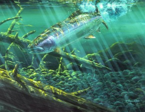 Steelhead Trout: Breaking The Surface