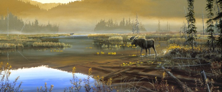 Moose Checking Out the Competition - Giclees - Artwork Reproductions - Giclees, Paper Prints, Prints and Gift Store