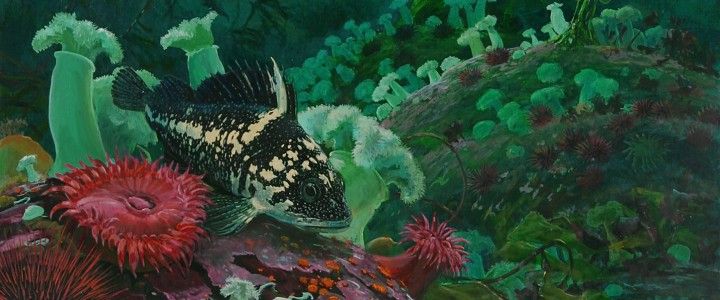 China Rockfish - Giclees - Artwork Reproductions - Giclees, Paper Prints, Prints and Gift Store