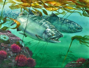 Chinook Salmon: Breaking Through