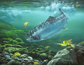 Coho Salmon: Return to Fresh Water