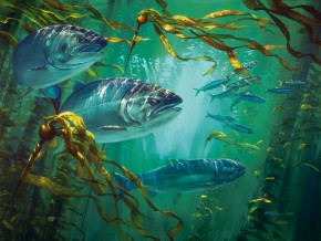 Coho Salmon: Patrolling the Kelp Bed I