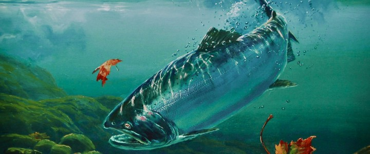 Coho Salmon: Return to Fresh Water - Paper Prints - Artwork Reproductions - Giclees, Paper Prints, Prints and Gift Store
