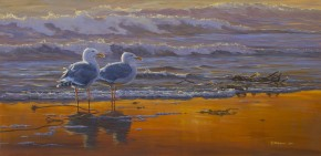 Glaucous Winged Gulls: Sunset Breeze