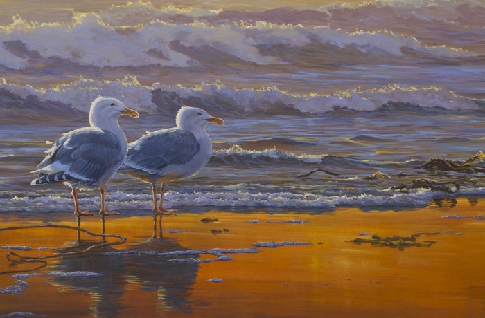 Glaucous Winged Gulls: Sunset Breeze - Original Painting by Mark Hobson