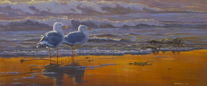 Glaucous Winged Gulls: Sunset Breeze - Giclees - Artwork Reproductions - Giclees, Paper Prints, Prints and Gift Store
