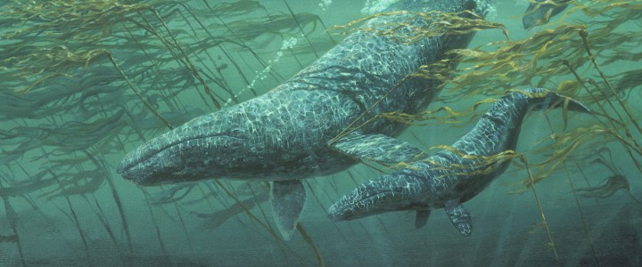 Grey Whales: Heading for Cover - Paper Prints - Artwork Reproductions - Giclees, Paper Prints, Prints and Gift Store