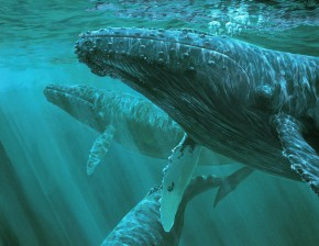 Humpbacks: In Emerald Seas
