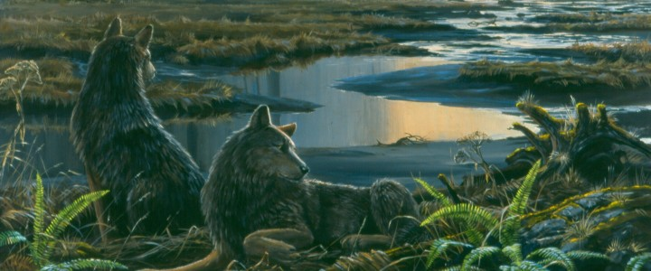 Wolves: Keeping Watch Over Mudflats - Giclees - Artwork Reproductions - Giclees, Paper Prints, Prints and Gift Store