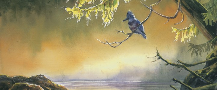 Kingfisher in Morning Mist - Giclees - Artwork Reproductions - Giclees, Paper Prints, Prints and Gift Store
