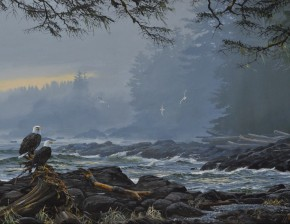 Bald Eagles: Waiting in the Rain