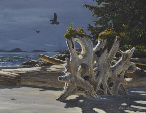 Cedar Stump At Medallion Beach: Vargas Island