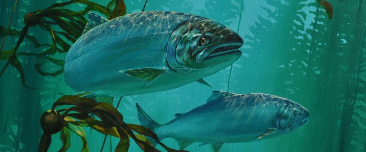 Coho Salmon: Patrolling the Kelp Bed II - Acrylics & Oils - Original Artwork - Acrylics, Oils & Watercolours