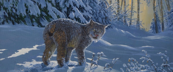 Lynx: Making Fresh Tracks - Acrylics & Oils - Original Artwork - Acrylics, Oils & Watercolours