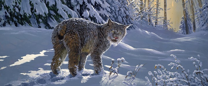 Lynx: Making Fresh Tracks - Giclees - Artwork Reproductions - Giclees, Paper Prints, Prints and Gift Store