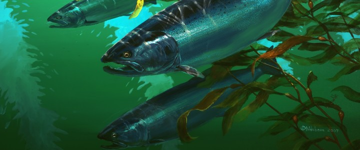 Chinook Salmon: Travelling Companions - Giclees - Artwork Reproductions - Giclees, Paper Prints, Prints and Gift Store