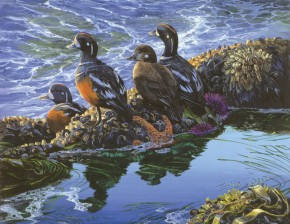 Harlequin Ducks on the Edge