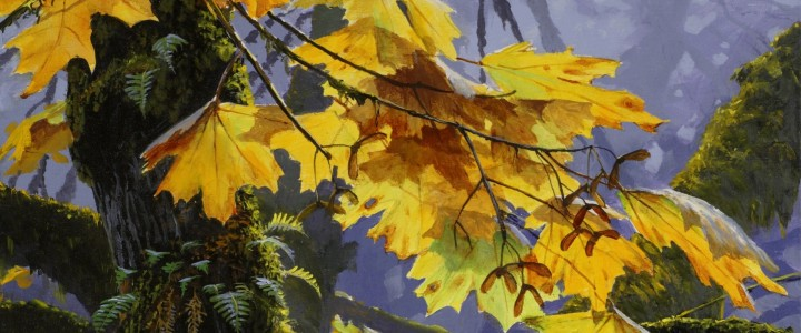 Maple Splendour - Prints & Art Cards - Artwork Reproductions - Giclees, Paper Prints, Prints and Gift Store