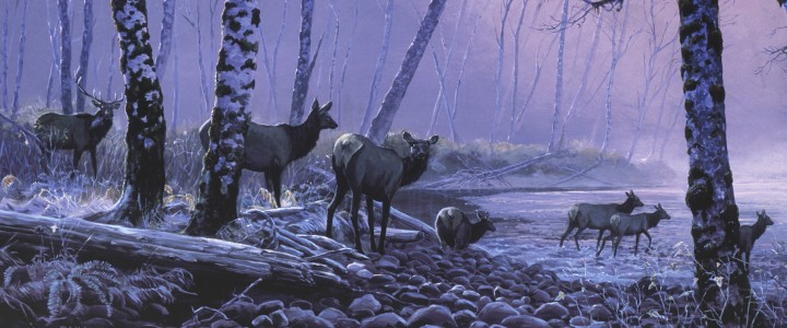 Roosevelt Elk: November Crossing - Paper Prints - Artwork Reproductions - Giclees, Paper Prints, Prints and Gift Store