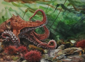 Octopus: King Of The Kelp Bed (Consignment)