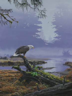 Bald Eagle: On Closer Inspection