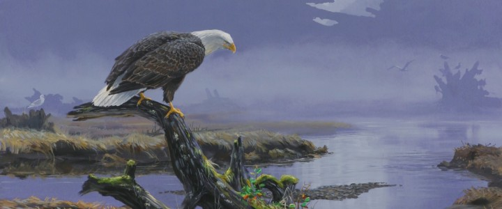 Bald Eagle: On Closer Inspection - Giclees - Artwork Reproductions - Giclees, Paper Prints, Prints and Gift Store