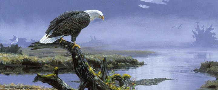 Bald Eagle: On Closer Inspection - Paper Prints - Artwork Reproductions - Giclees, Paper Prints, Prints and Gift Store