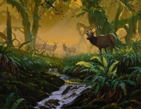 Roosevelt Elk: Phantoms of Shaw Creek