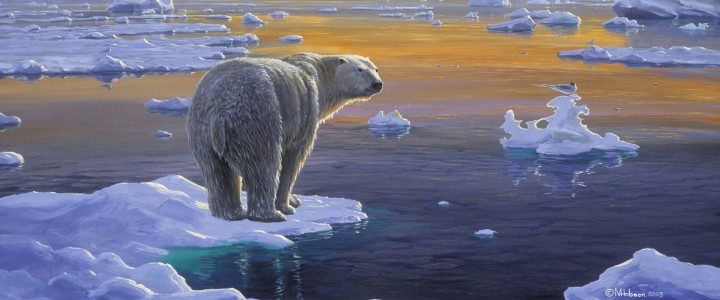 Polar Bear: Edge of Ice - Paper Prints - Artwork Reproductions - Giclees, Paper Prints, Prints and Gift Store