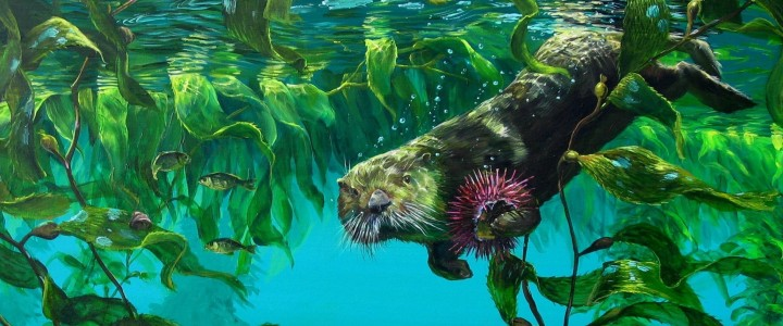 sea otter below the surface,giclees, sea otter, underwater, sea urchin, kelp, giclée, giclee, artwork, 2006, tofino, ucluelet, west coast, vancouver island, british columbia, b.c.,