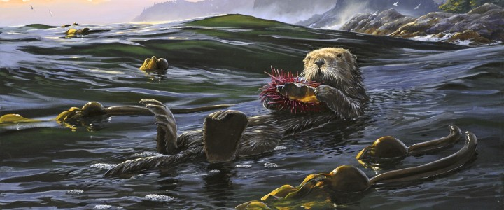 Sea Otter: Putting His Feet Up - Giclees - Artwork Reproductions - Giclees, Paper Prints, Prints and Gift Store