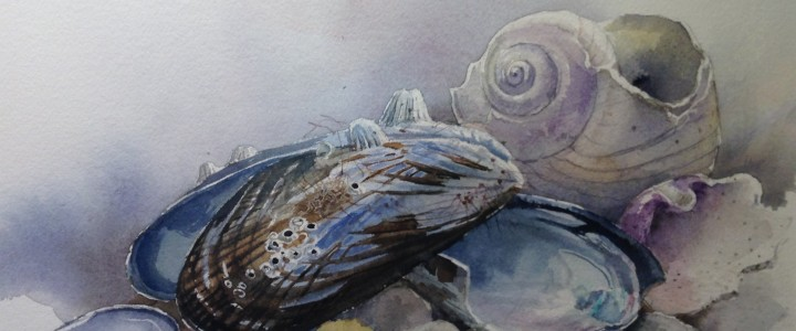 Shells (Consignment) - Watercolours - Original Artwork - Acrylics, Oils & Watercolours