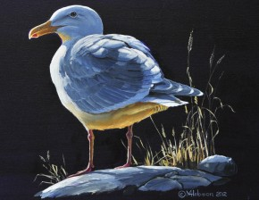 Glaucous Winged Gull: Head Honcho 2