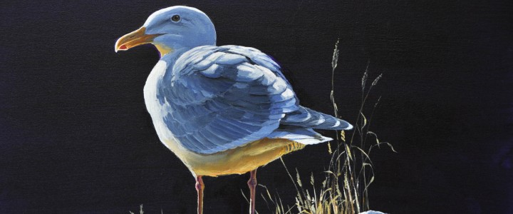 Glaucous Winged Gull: Head Honcho 2 - Acrylics & Oils - Original Artwork - Acrylics, Oils & Watercolours