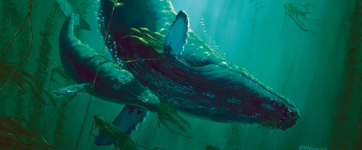 Three Humpbacks in the Kelp - Giclees - Artwork Reproductions - Giclees, Paper Prints, Prints and Gift Store