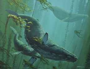 Three Humpbacks in the Kelp